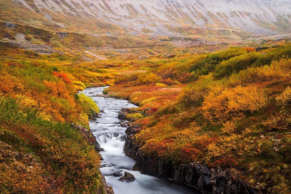 River and orange and red bushes in Iceland in autumn